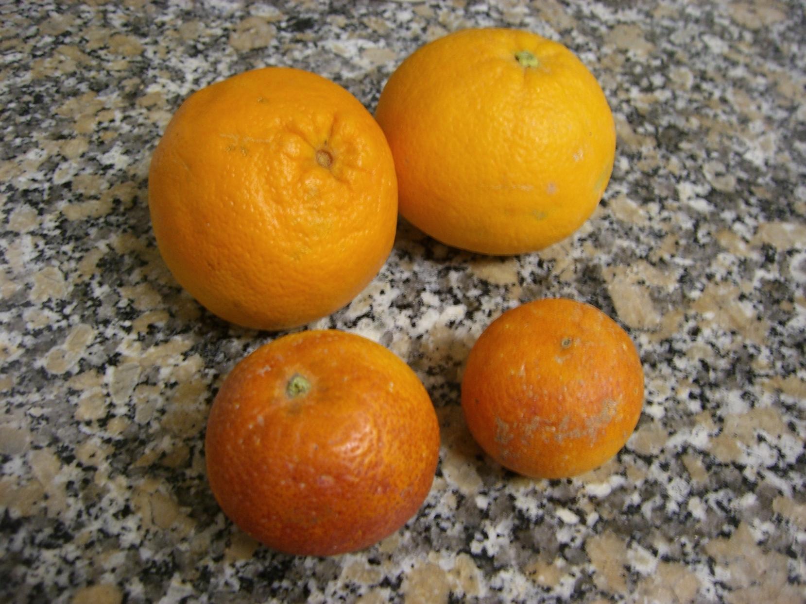 Naranjas y naranjassanguinas